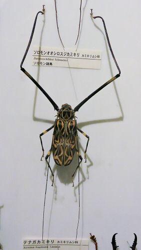 191010inochihoshi48.jpg
