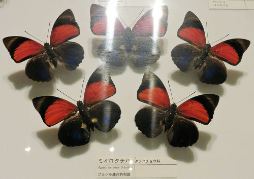 191010inochihoshi50.jpg