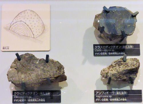 200206kagaku32.jpg