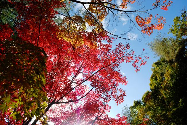 sasamori1.jpg
