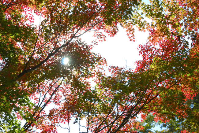 sasamori3.jpg