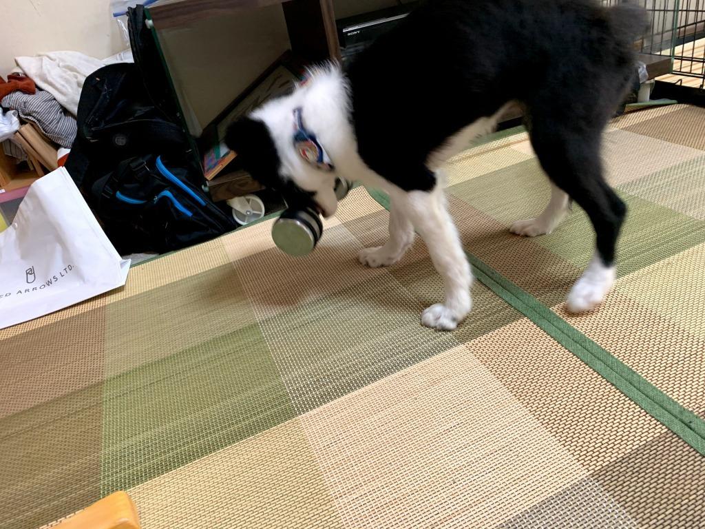 20191210犬01