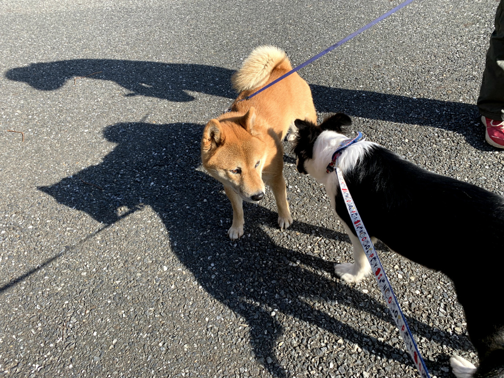20200110犬散歩