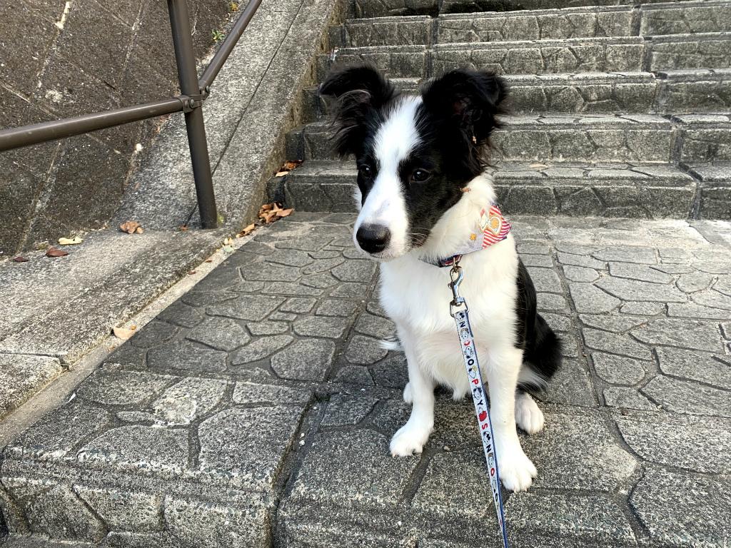 20200113犬散歩01