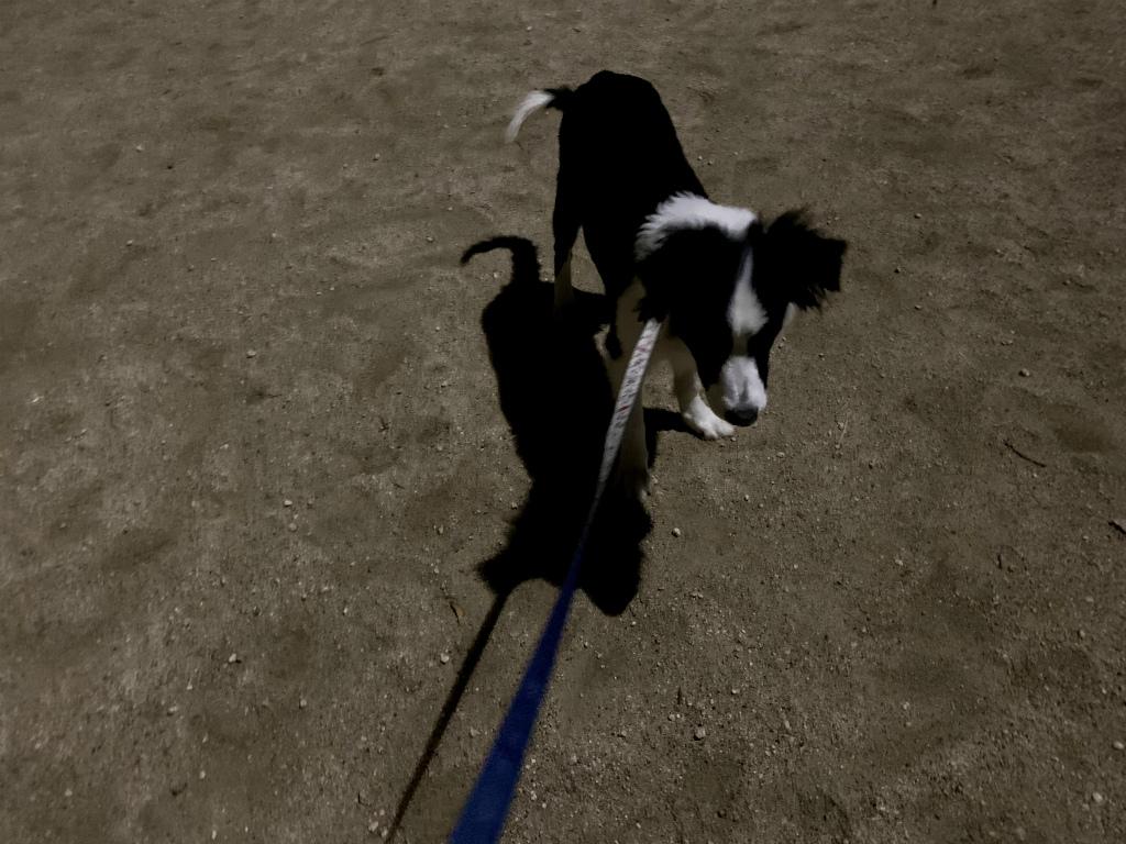 20200121犬朝の散歩