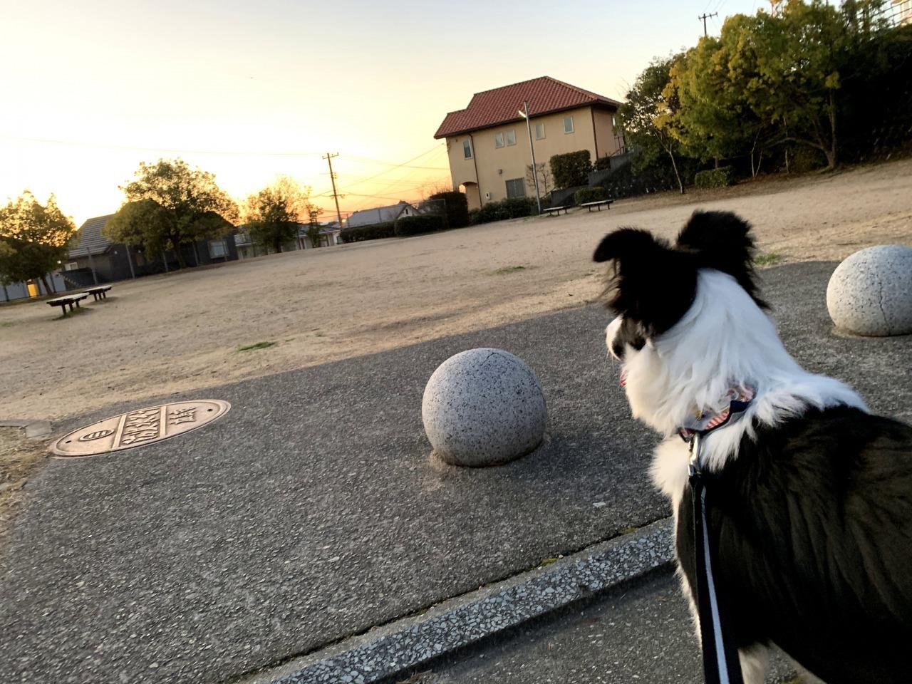 朝焼けくまちゃん02