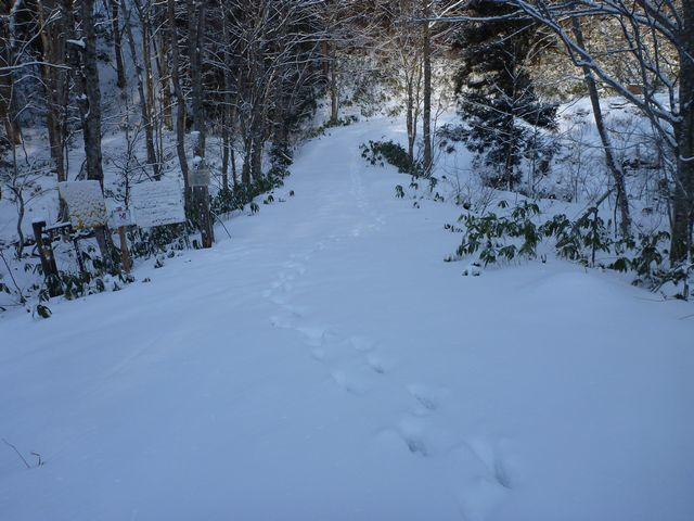 s1野生動物の足跡