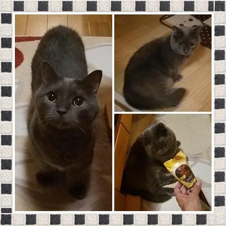 cats6t76rrrrddf.jpg