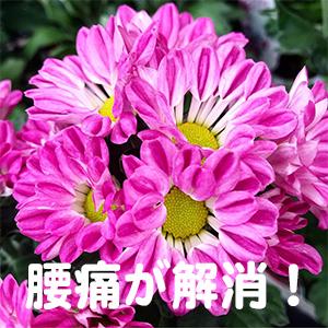 腰痛,奈良,滋賀,神戸