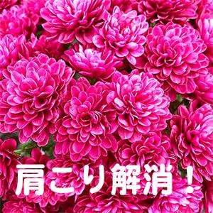 肩こり,大津,京都,奈良