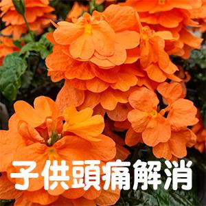 子供,頭痛,京都,広島,福岡