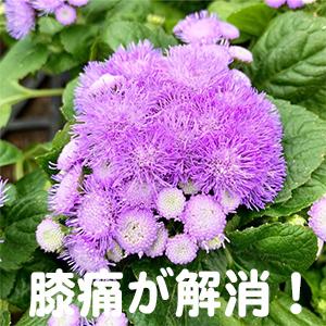 膝痛,京都,滋賀,奈良,大阪