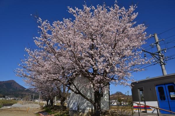 2019年4月20日 上田電鉄別所線 舞田 1000系1002編成