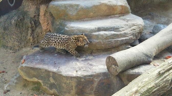 王子動物園 (4)