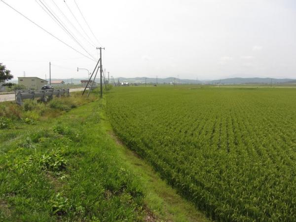 札沼線(碧水~北竜)跡