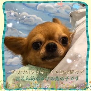 S__39174508.jpg