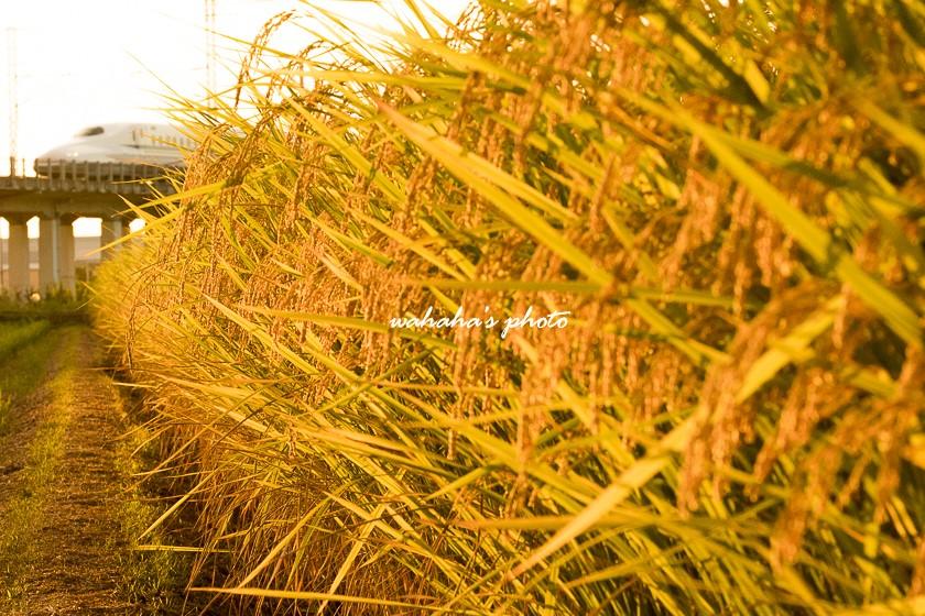 010917kanagasaki-1.jpg