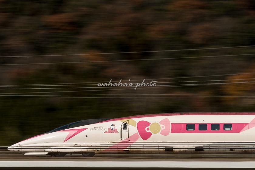 011215chugusagawa-3.jpg