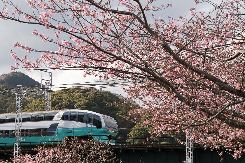 020201izukyu-4.jpg
