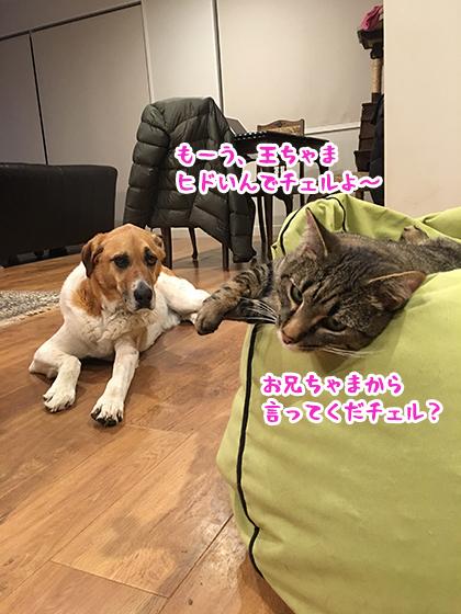 01102019_cat1.jpg