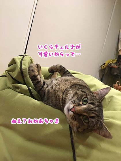 01102019_cat2.jpg