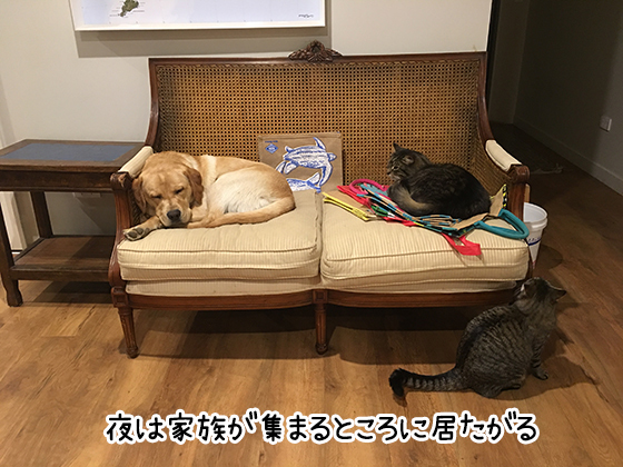 03092019_cat1.jpg