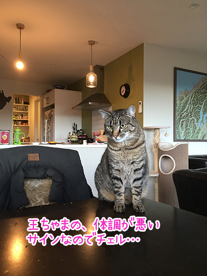 03092019_cat4.jpg