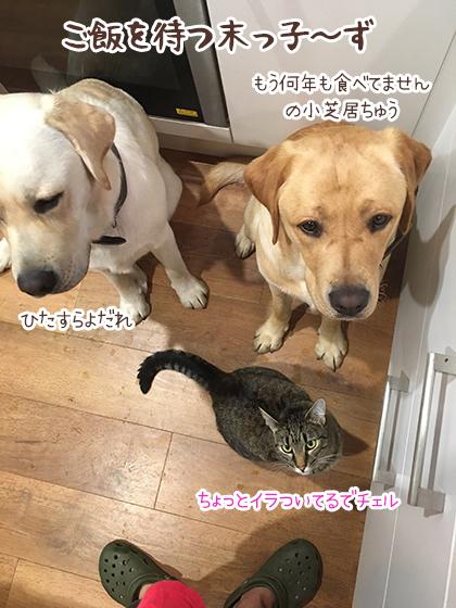 08032020_cat2.jpg