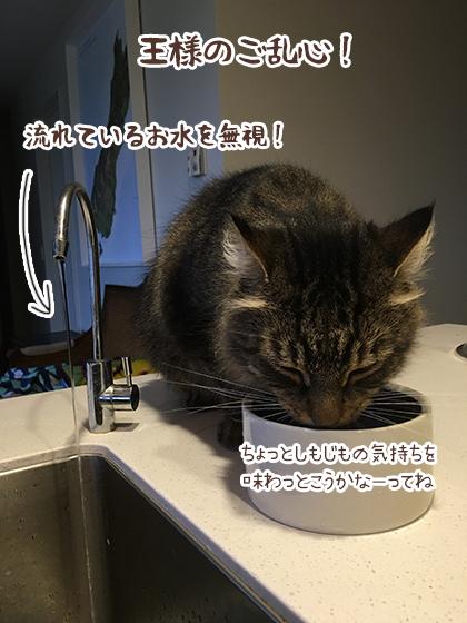 08032020_cat3.jpg