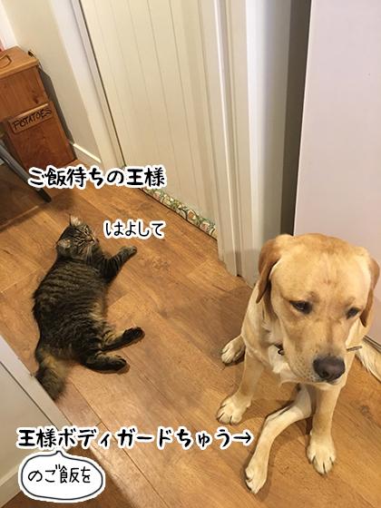 08032020_cat4.jpg