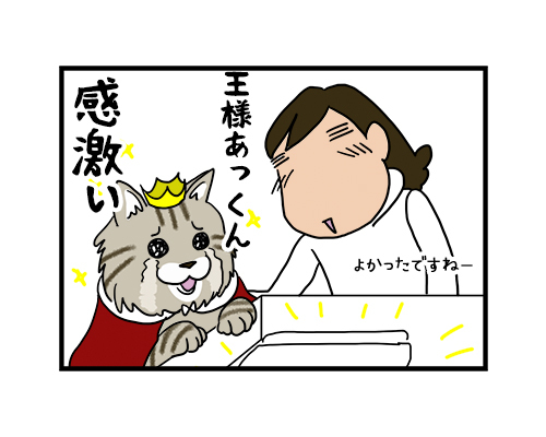 16092019_cat1koma.jpg