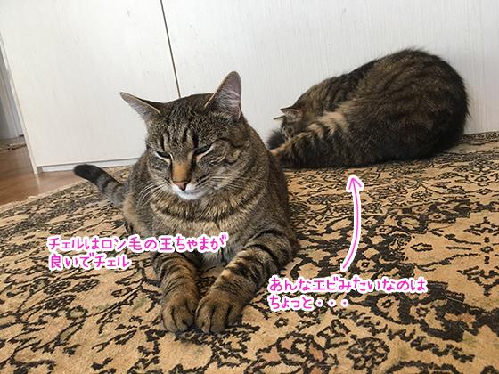 17122019_cat4.jpg
