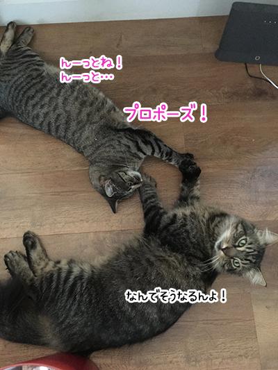 21012020_cat6.jpg