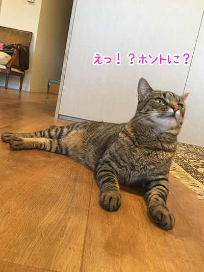 21012020_cat7.jpg
