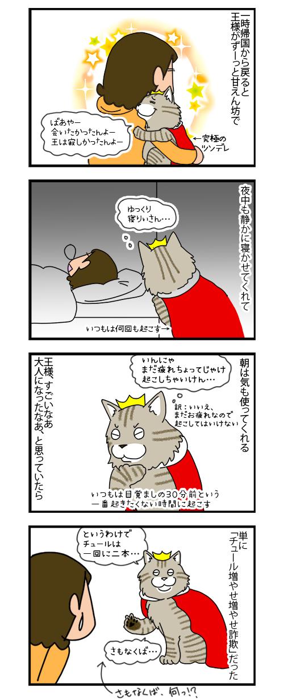 26112019_cat5koma.jpg