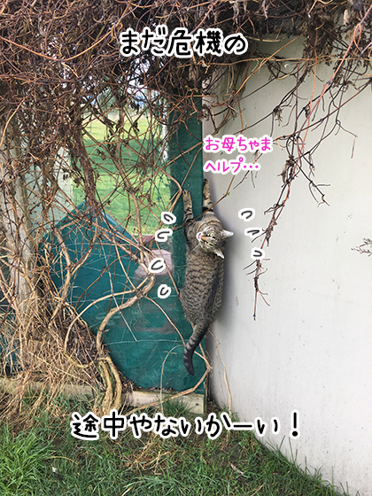 28092019_cat1.jpg