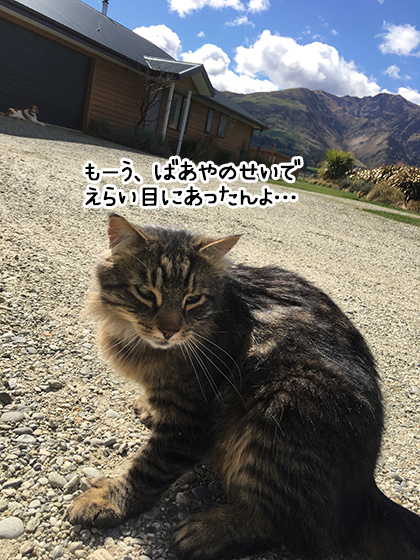28092019_cat2.jpg