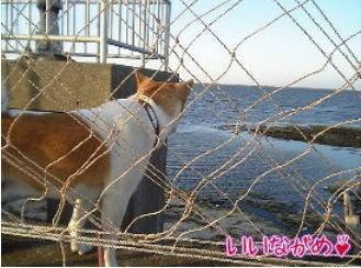 海を見つめるゴンタ