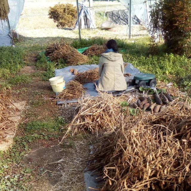 Kさん援農