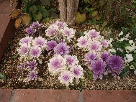 P2200046 花壇1