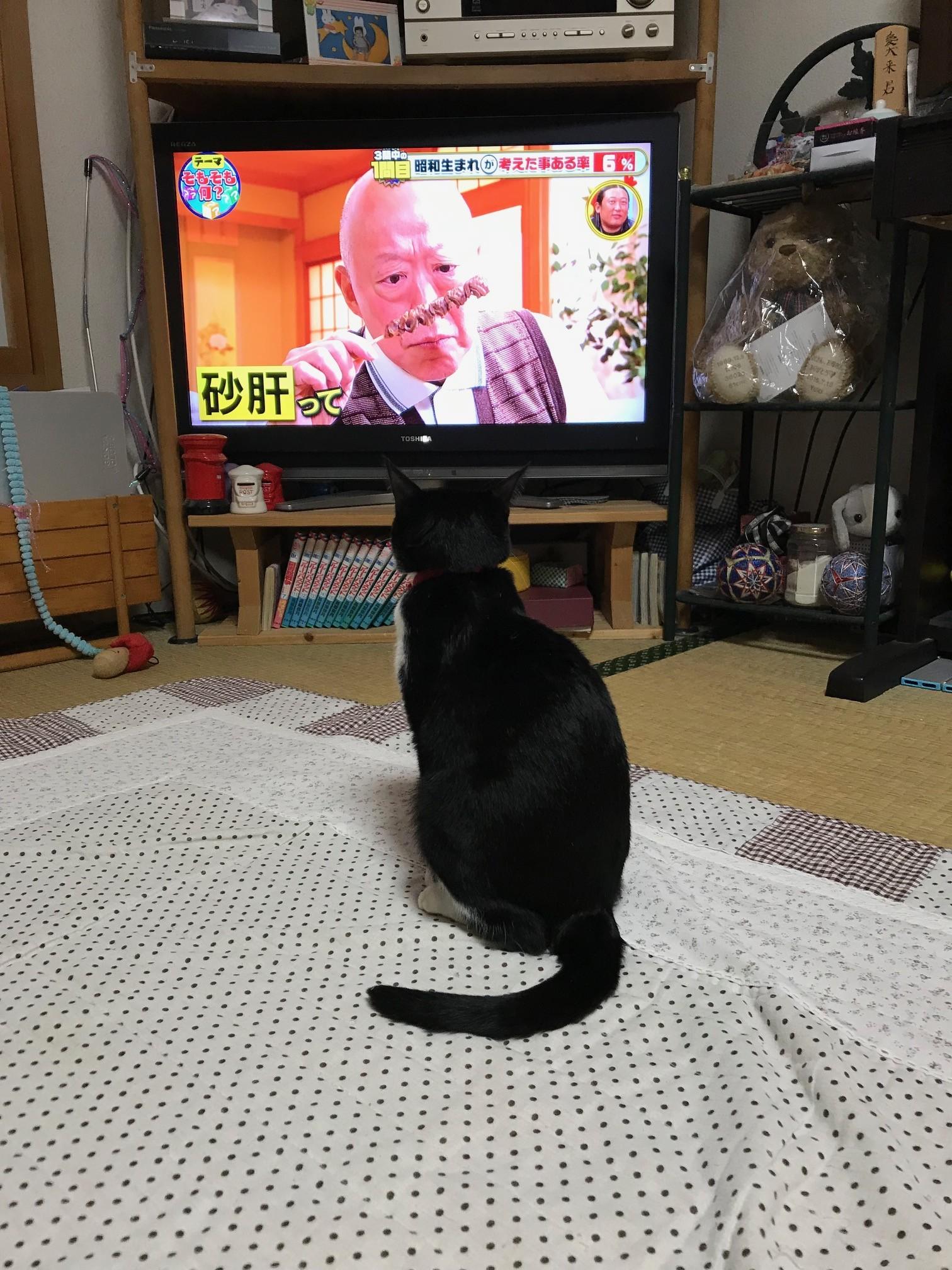 いこちゃん20191217
