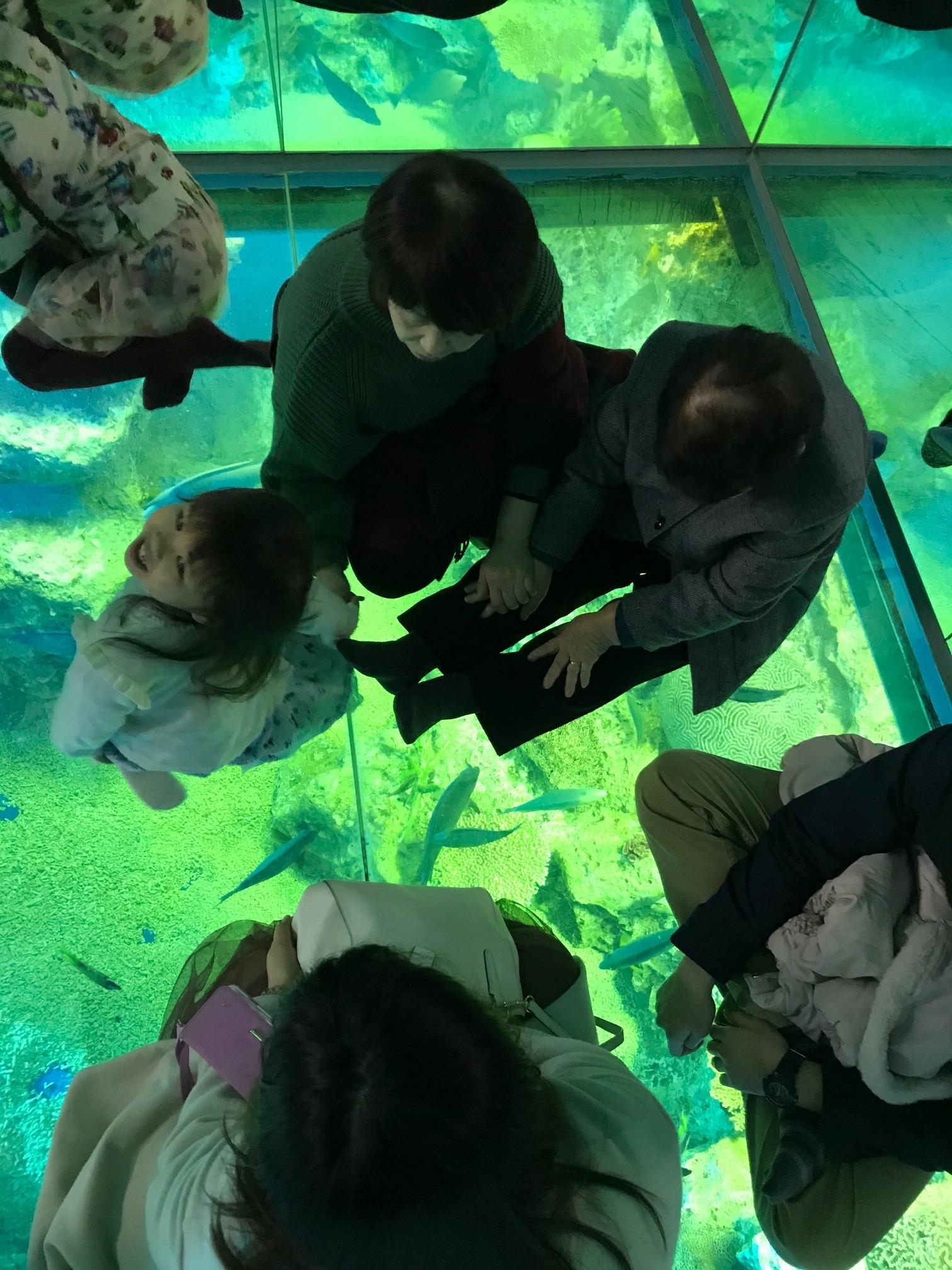 松島水族館スルー