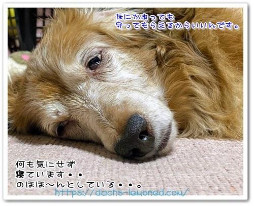 IMG_0141.jpg