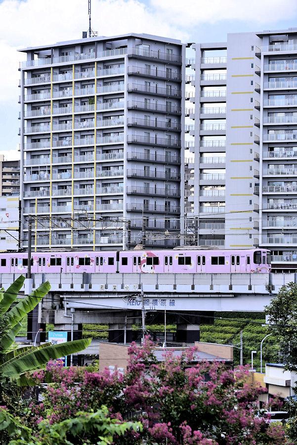5464_ピンク色の電車