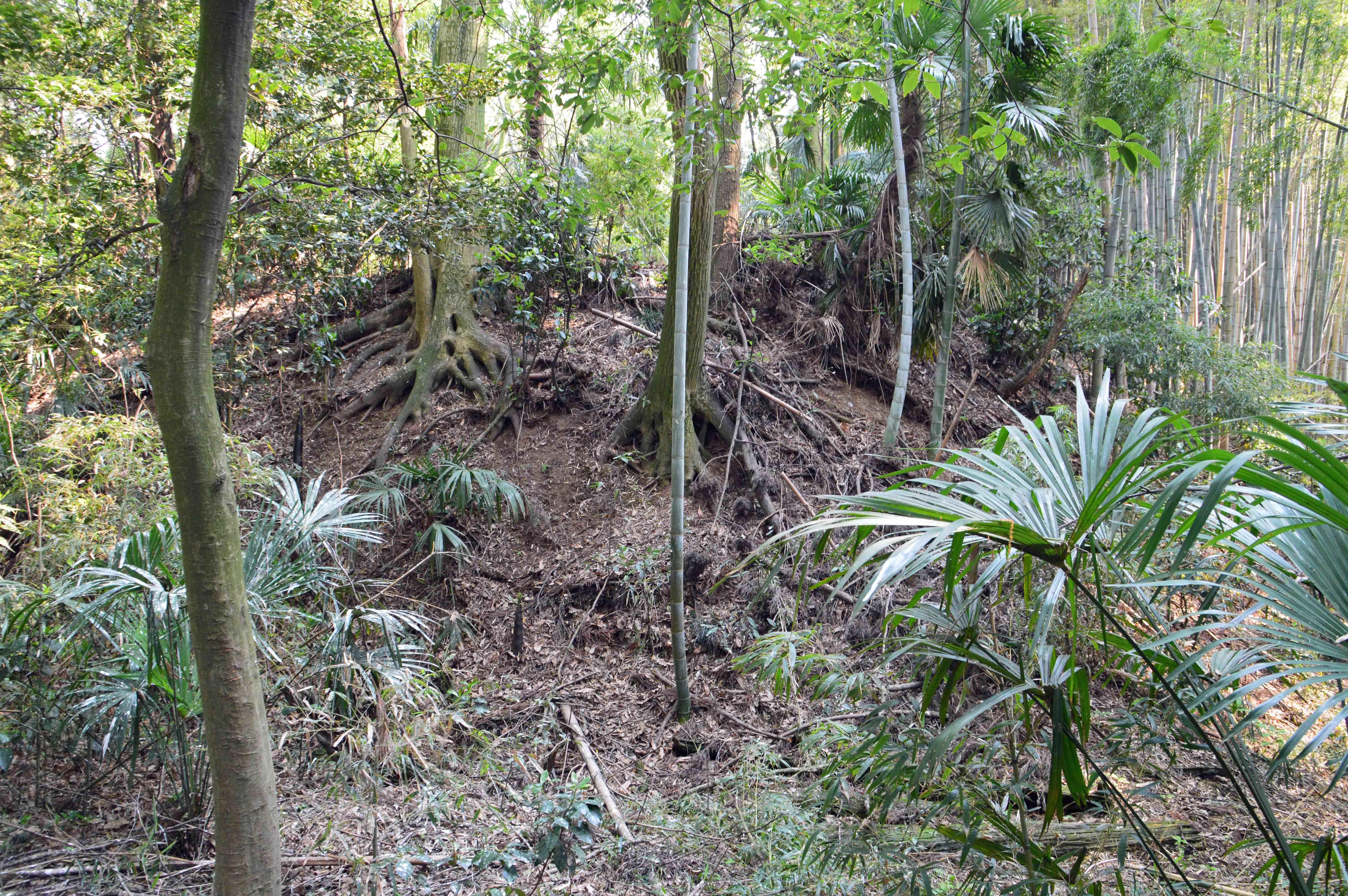 多功城 雑木林の中の遺構 隅の土塁