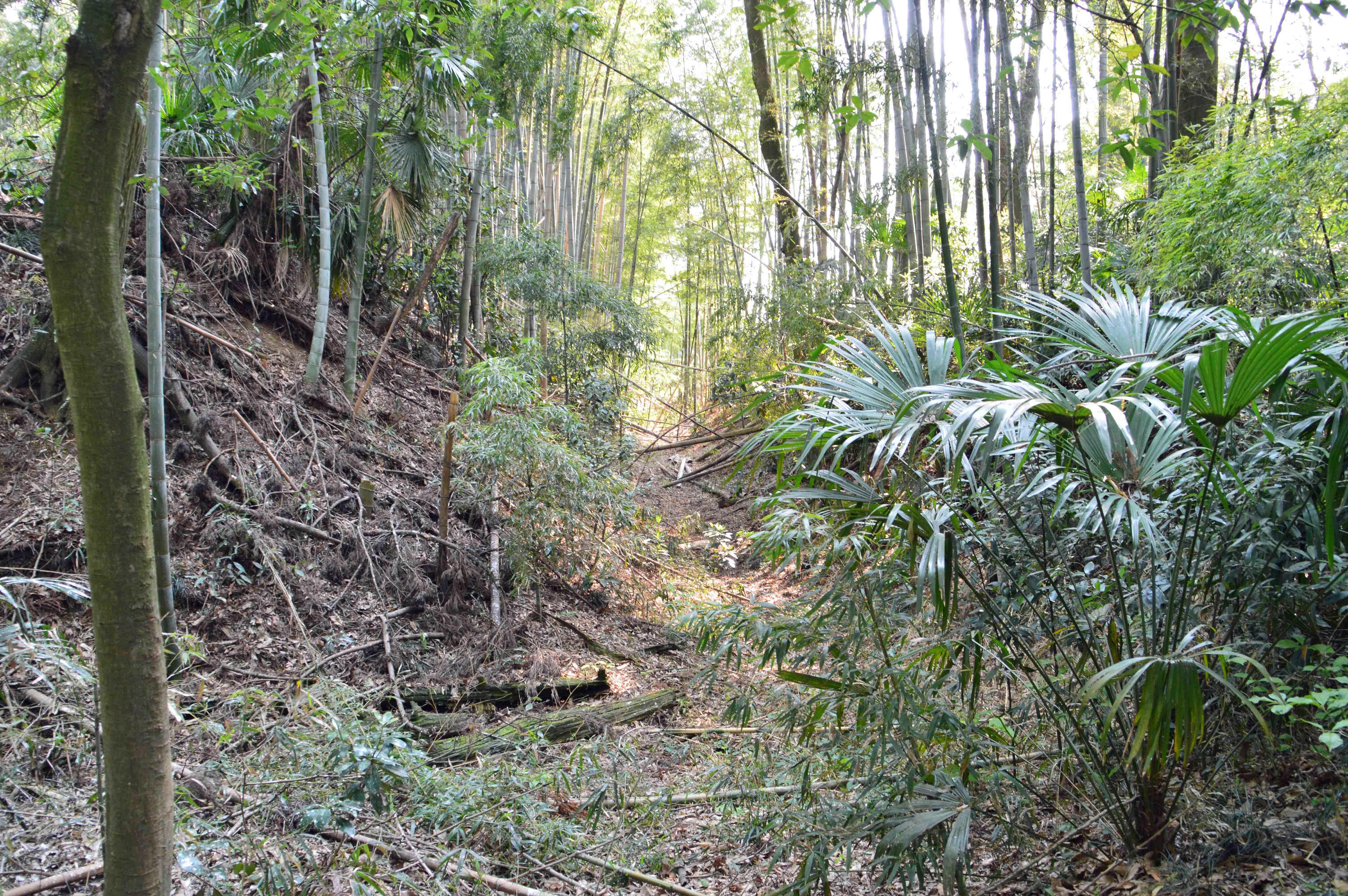 多功城 雑木林の中の堀 1