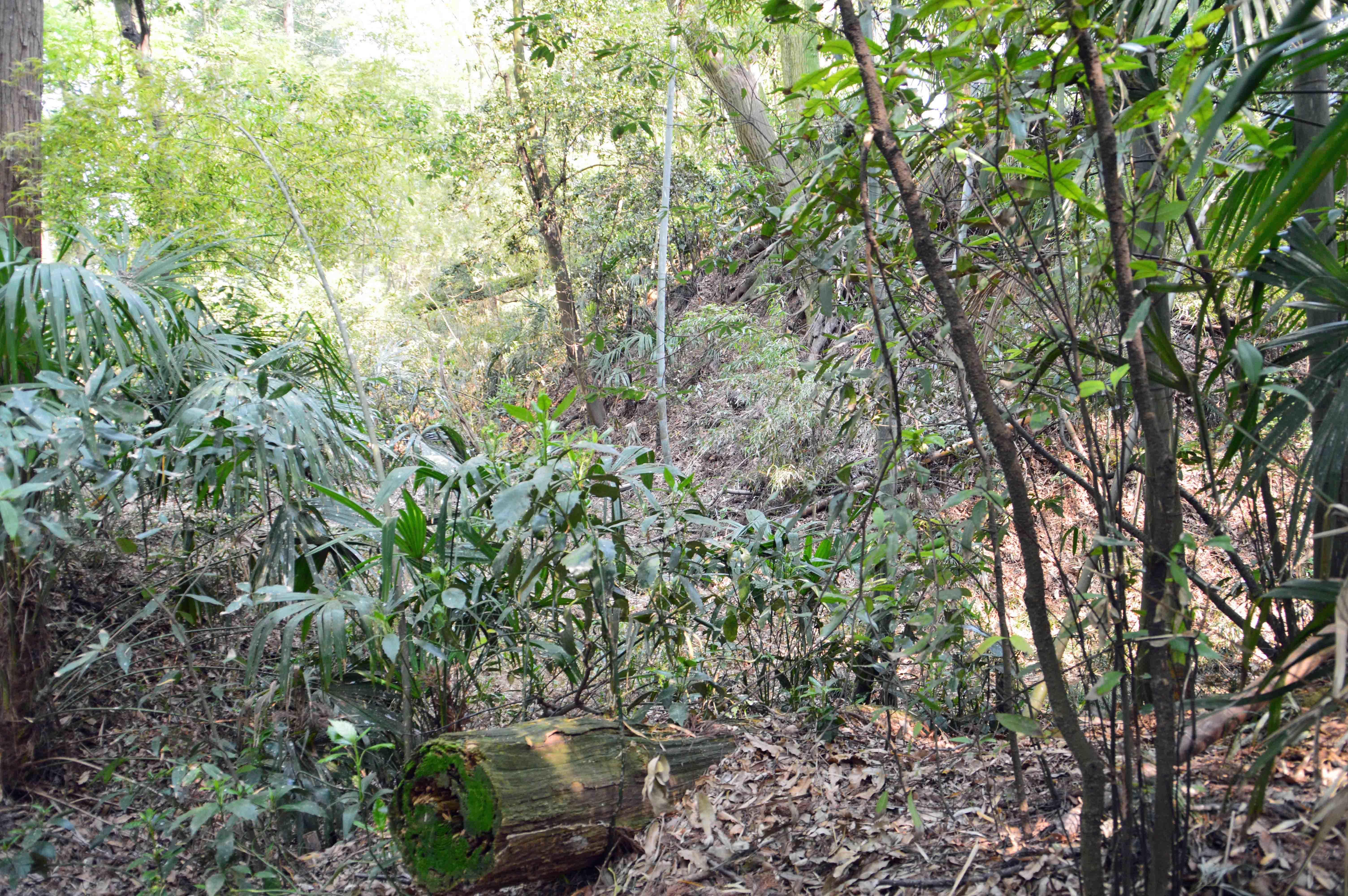 多功城 雑木林の遺構 堀 2