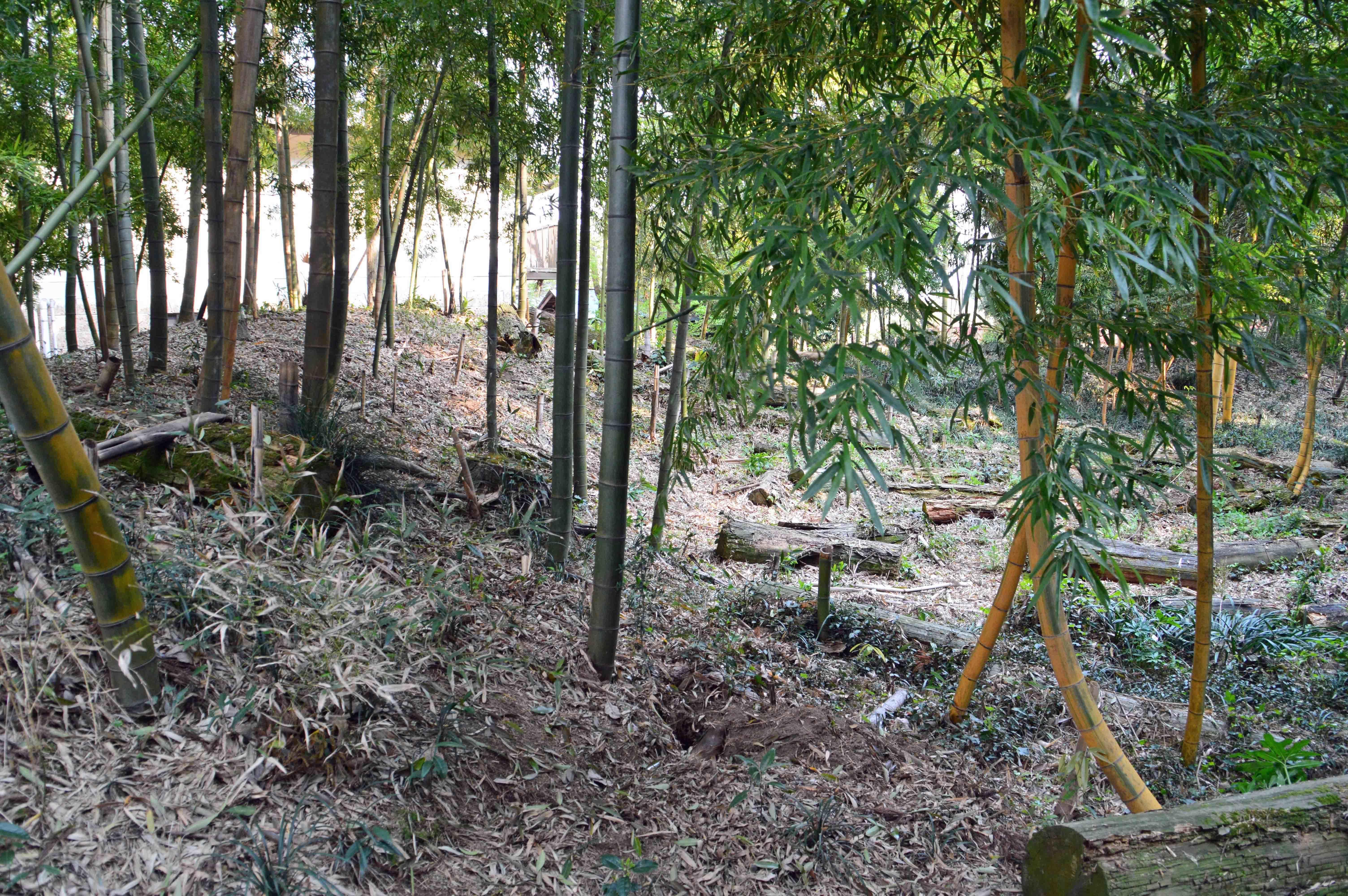 細谷館 郭内から見た土塁