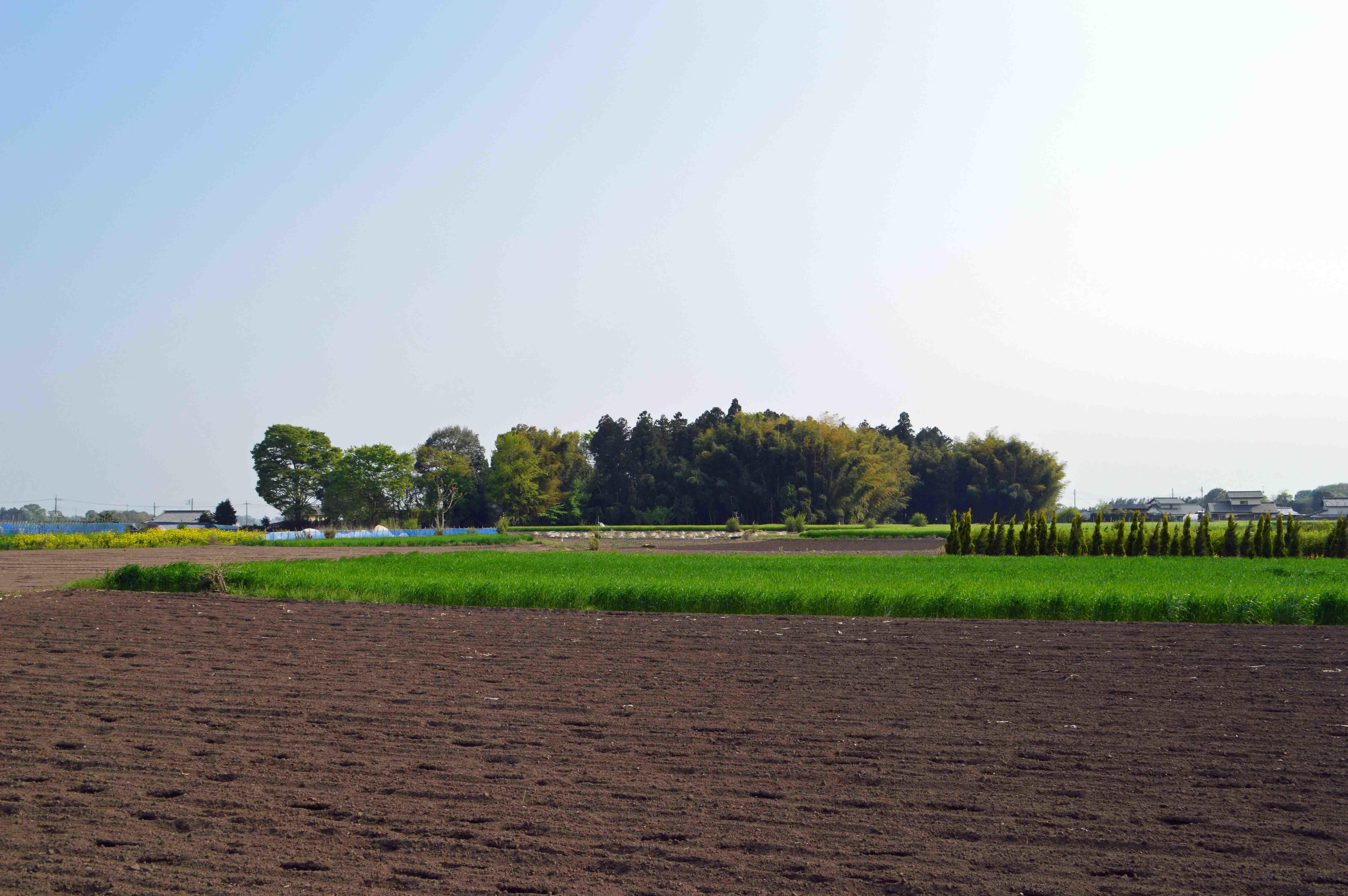細谷城 遠景