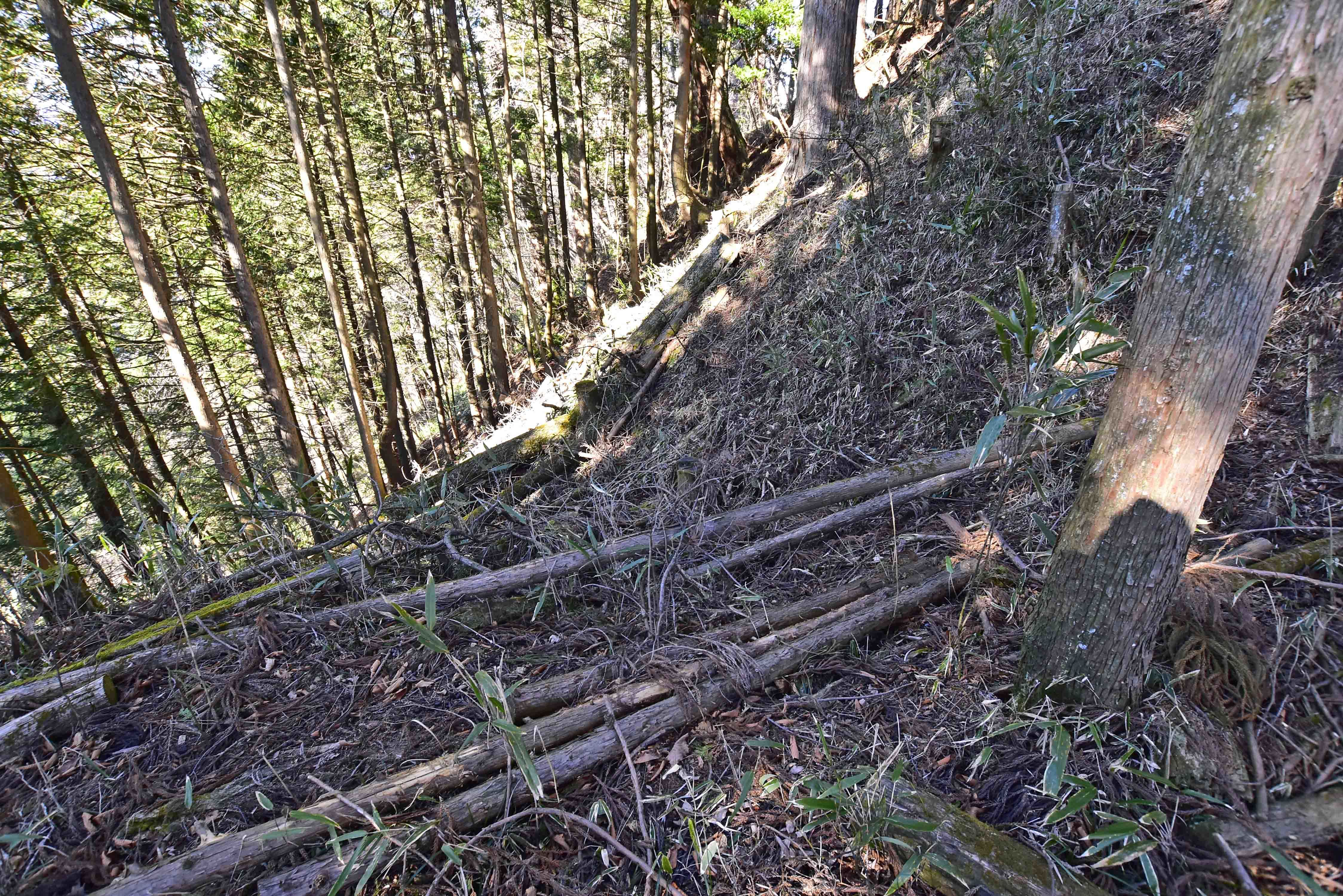 左側尾根 1本目堀切からの竪堀